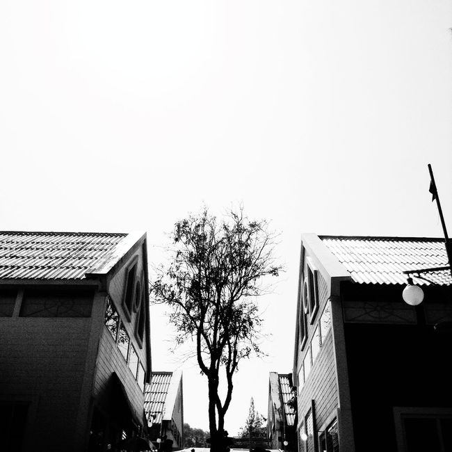 Holiday Black And White Bw_collection Nature Taking Photos Traveling Trees That's Me Blackandwhite