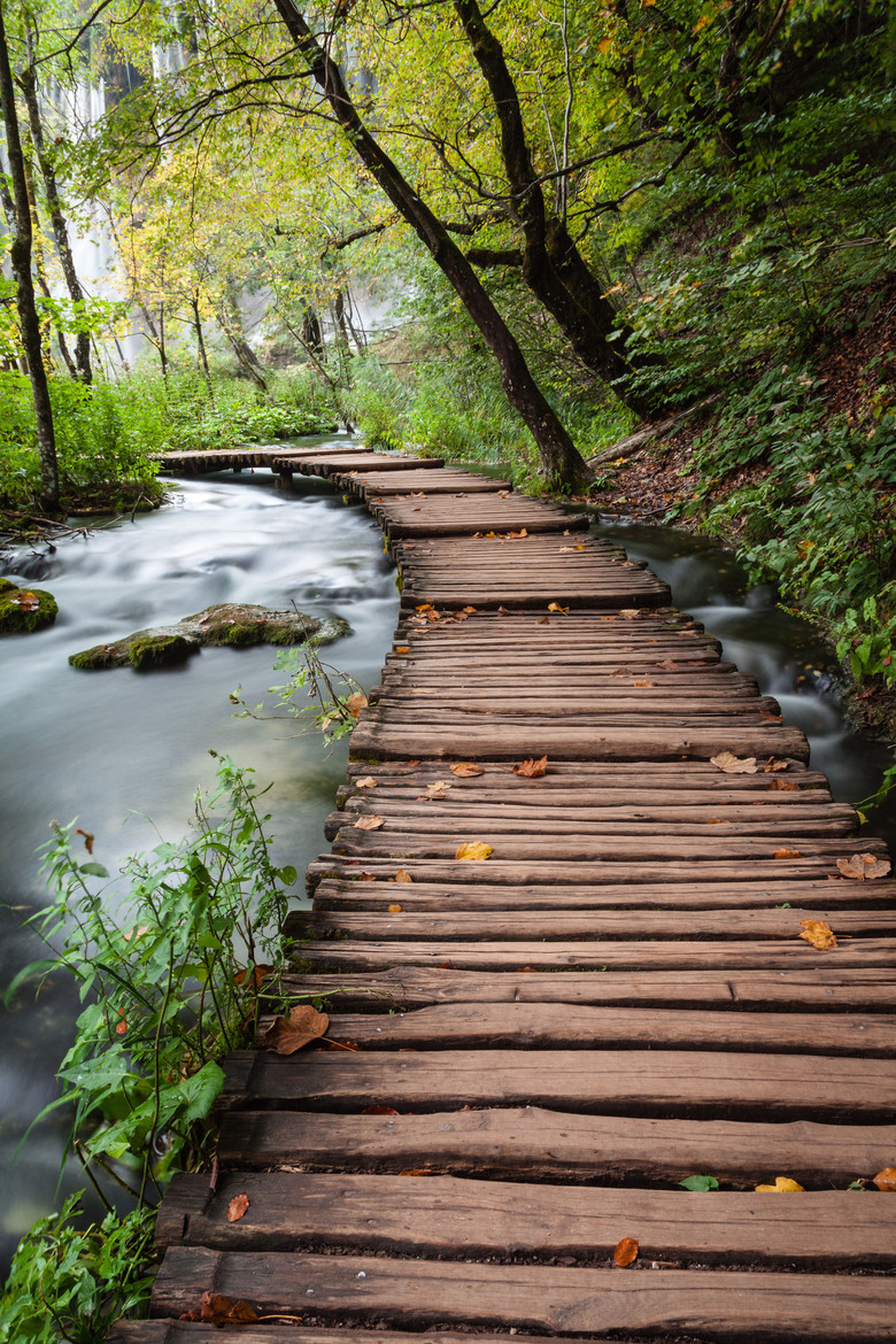 tree, the way forward, wood - material, boardwalk, tranquility, nature, growth, water, forest, green color, wood, wooden, tranquil scene, beauty in nature, footbridge, plant, leaf, park - man made space, outdoors, day