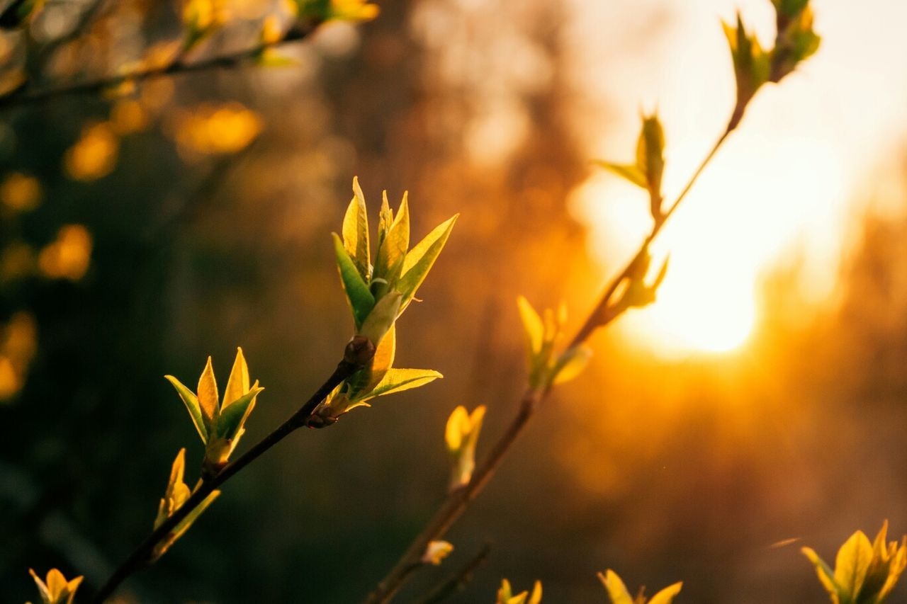 Beautiful stock photos of spring, Biology, Bunch, Copy Space, Finland