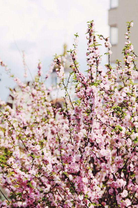 Spring Flowers Pink Spring Flowers April 2014