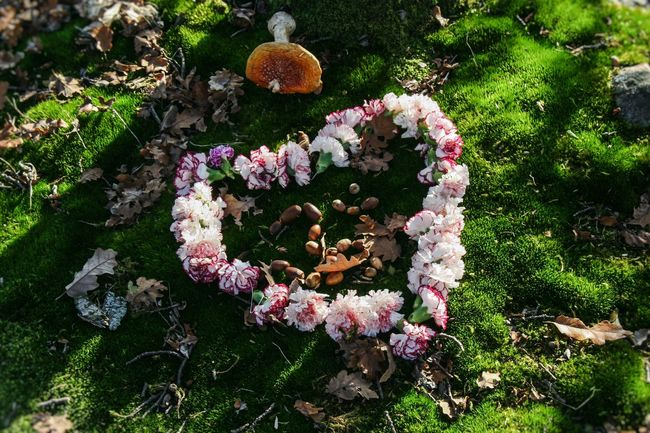 Beauty In Nature Close-up Day Flower Fragility Freshness Growth Heart Mushroom Nature No People Outdoors Plant