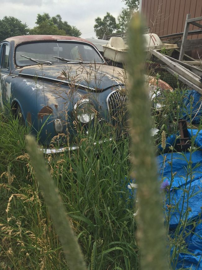 Eyeemphoto Behind the tall weeds she has found her resting place, just waiting to be seen & cared for like when she was younger. Her memories are many. If her tires could talk, they would tell you all about the many trips & roads she's rolled across. Antique Car 1958 JAGUAR Beauty Of Decay Old But Precious Vintage Photography Instagrammer Old But Awesome Transportation Day Obsolete Outdoors No People Backyard Daytime Femalephotographer Stories Of The Abandoned