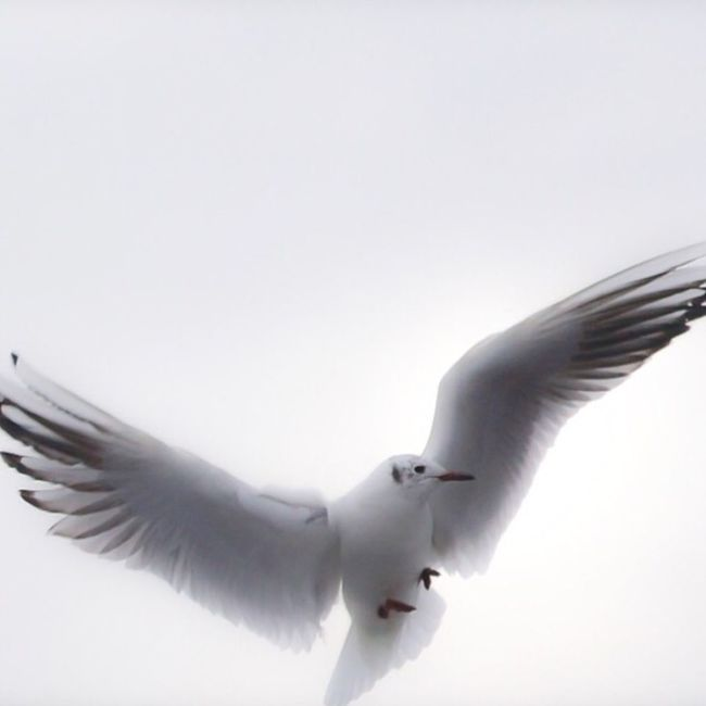 Enjoying Life Bird Sky Hello World Animal