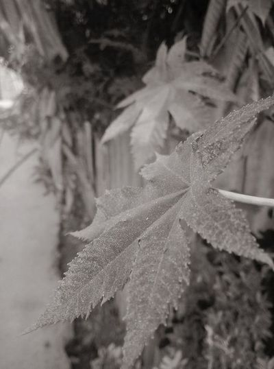 nature leaves Cold Temperature Day Freshness Leaf Nature Nature Outdoors Plant Winter First Eyeem Photo