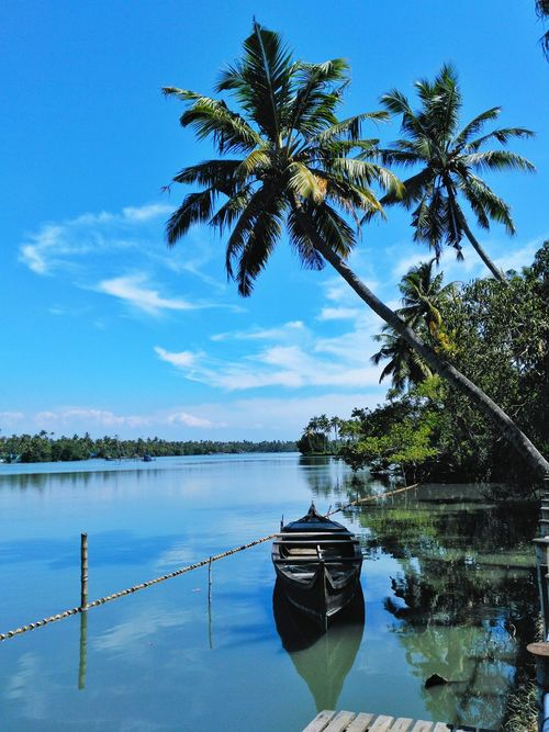 Country boat on Kerala backwaters. Palm Tree Water Nautical Vessel Transportation Boat Sky Kerala Lake Tranquil Scene Tranquility Mode Of Transport Solitude Waterfront Nature Calm Day Blue Scenics Growth Outdoors India Travel Tourism Copy Space Take Over Contrast