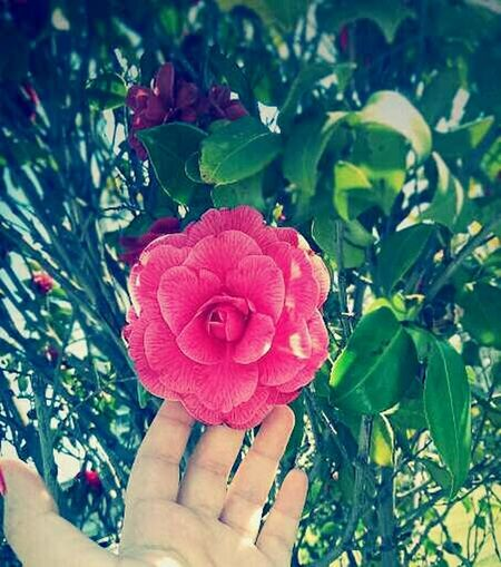 Make today so awesome ,so yesterday gets jealous..🌹🌹😂😉😉😉 Taking Photos Hanging Out Enjoying Life By Me ♡♡ Roses🌹 flowers #цветы photo фото EyeEm Nature Lover Eyeem Flower Lover Eyeemflowersofspring
