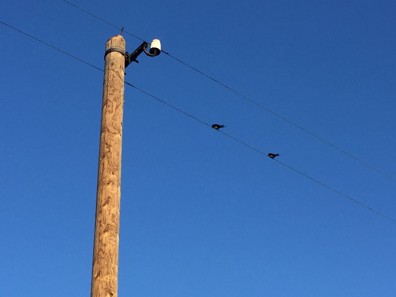 Low Angle View Of Birds Perching On Telephone Line