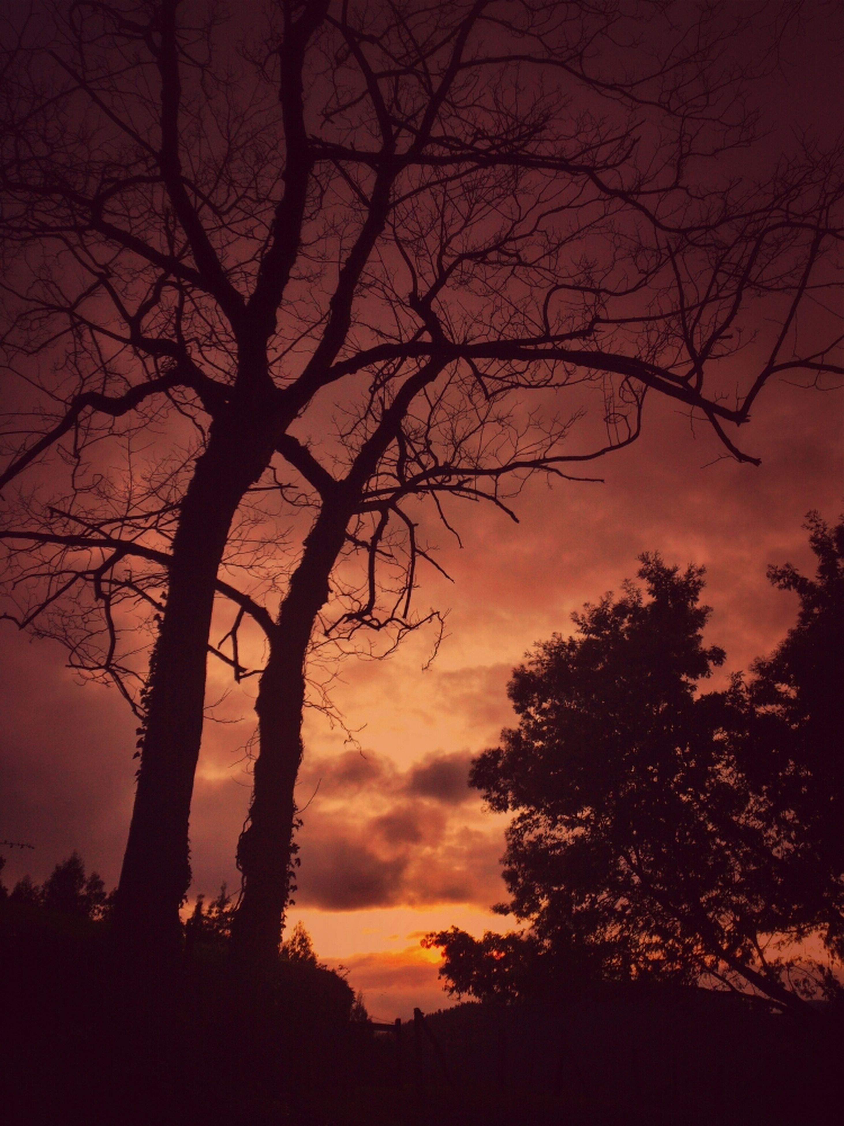 silhouette, sunset, tree, bare tree, tranquility, sky, tranquil scene, scenics, beauty in nature, branch, orange color, nature, low angle view, idyllic, cloud - sky, tree trunk, dusk, dramatic sky, outdoors, dark