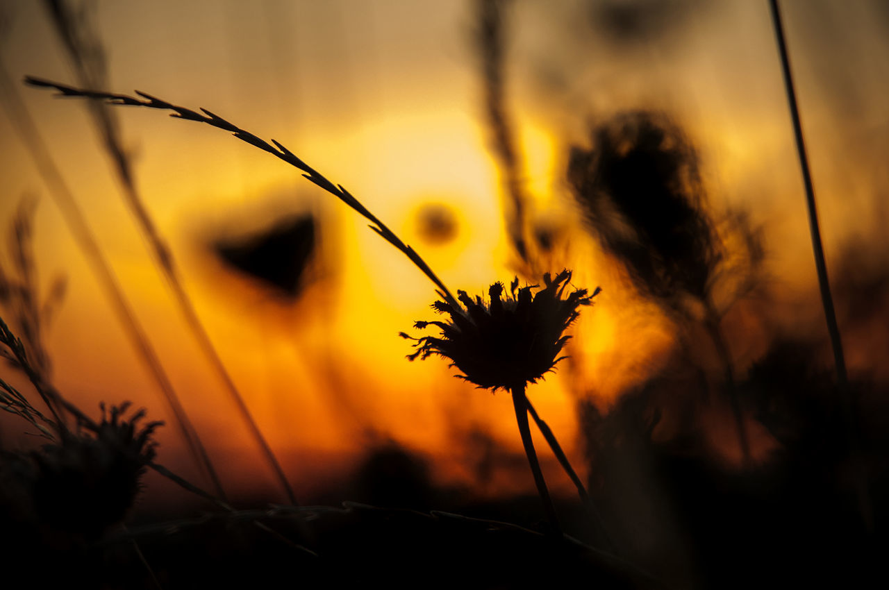 Beautiful Light Beauty In Nature Close-up Day End Of The Day Fields Of Gold Flowers Golden Hour Grass Grasslands Growth Meadow Meadow Flowers Nature No People Outdoors Plant Serenity Soft Sunset Tranquility Horizontal