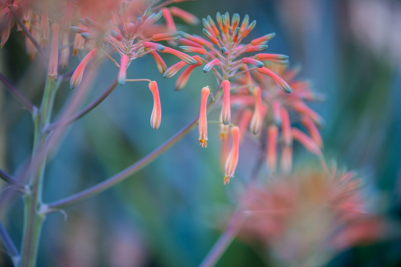 ©Amy Boyle Photography Beauty In Nature Blooming Close-up Day Flower Fragility Freshness Growth Nature No People Outdoors Plant
