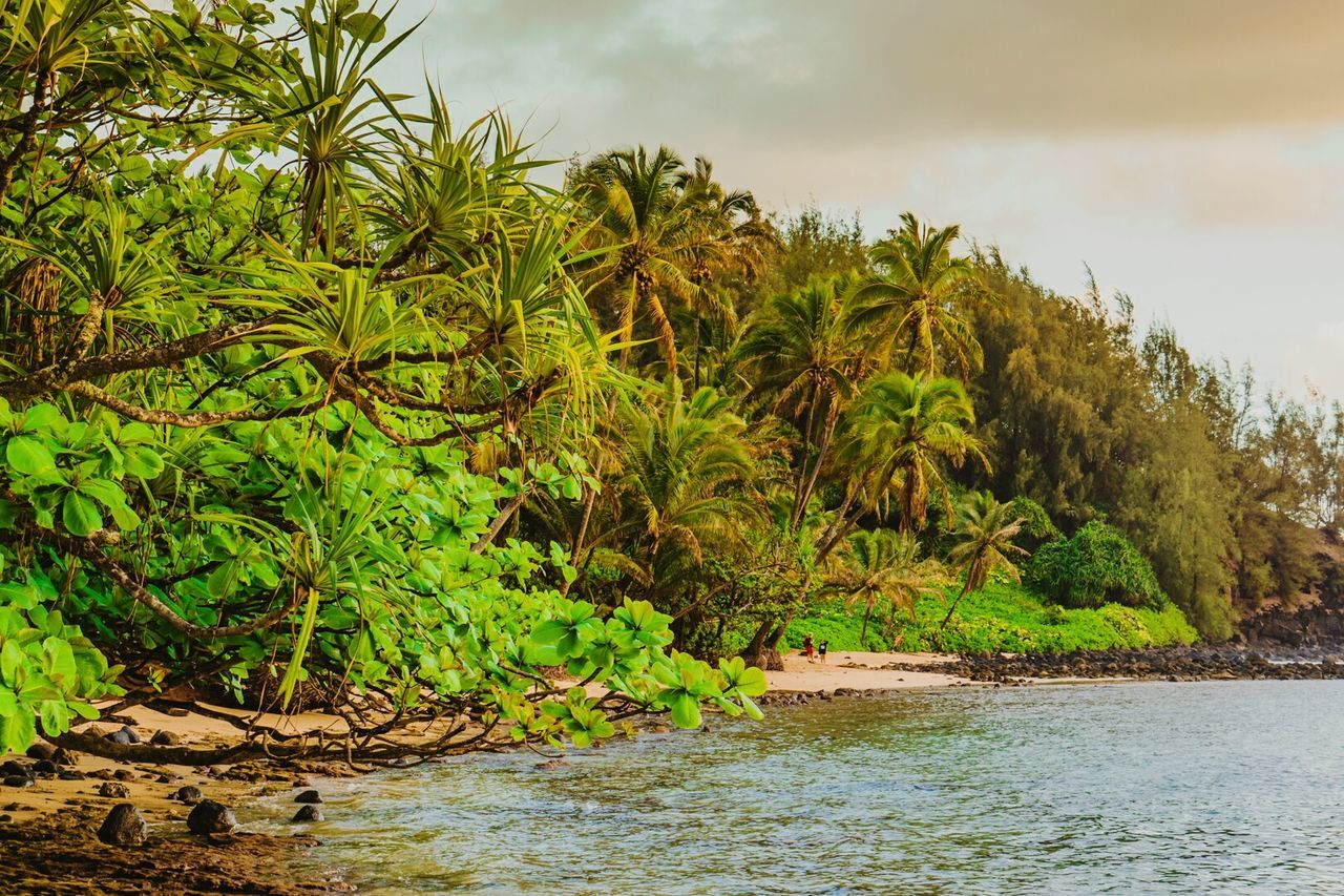 Nature Tree Landscape Water Tropical Climate Environmental Conservation River Social Issues No People Plant Wetland Green Color Beauty In Nature Cloud - Sky Outdoors Scenics Sky Palm Tree Ecosystem  Day Green Color Kauai Hawaii Hawaii Lifeisbeautiful KalalauTrail
