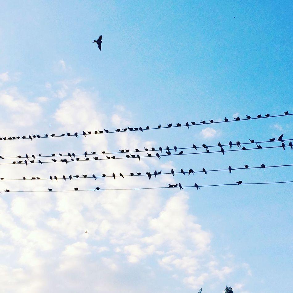 """""""Sen gülünce gün Cumartesi olur bir kuş havalanır gökyüzüne."""" - Anıyakala Özdemir Asaf Bird Flying EyeEm Gallery Türkiye Turkish Nature_collection Turkey Hi!"""