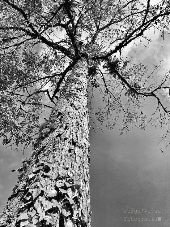 Camping Fhotographynature Nature Samsung Galaxy Note 3 Fhotography Blancoynegro Grandeza Arboles , Naturaleza