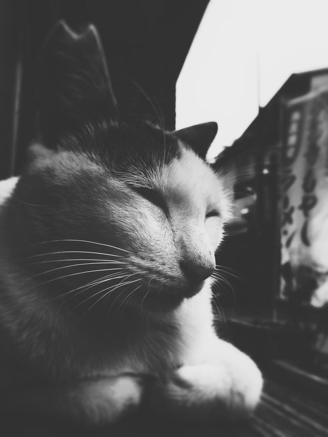 Cat Domestic Animals Animal Themes Close-up Relaxation One Animal Selective Focus Blackandwhite Monochrome Eyem Best Shots Watching Snapshot IPhoneography Mobilephotography