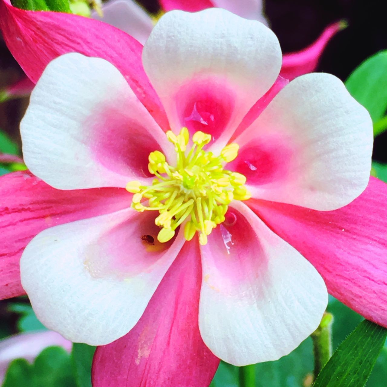 Flower Tropical Flowers Pink And White Open Neon Exotic Warm Colors Thrive Petals🌸 Face Value
