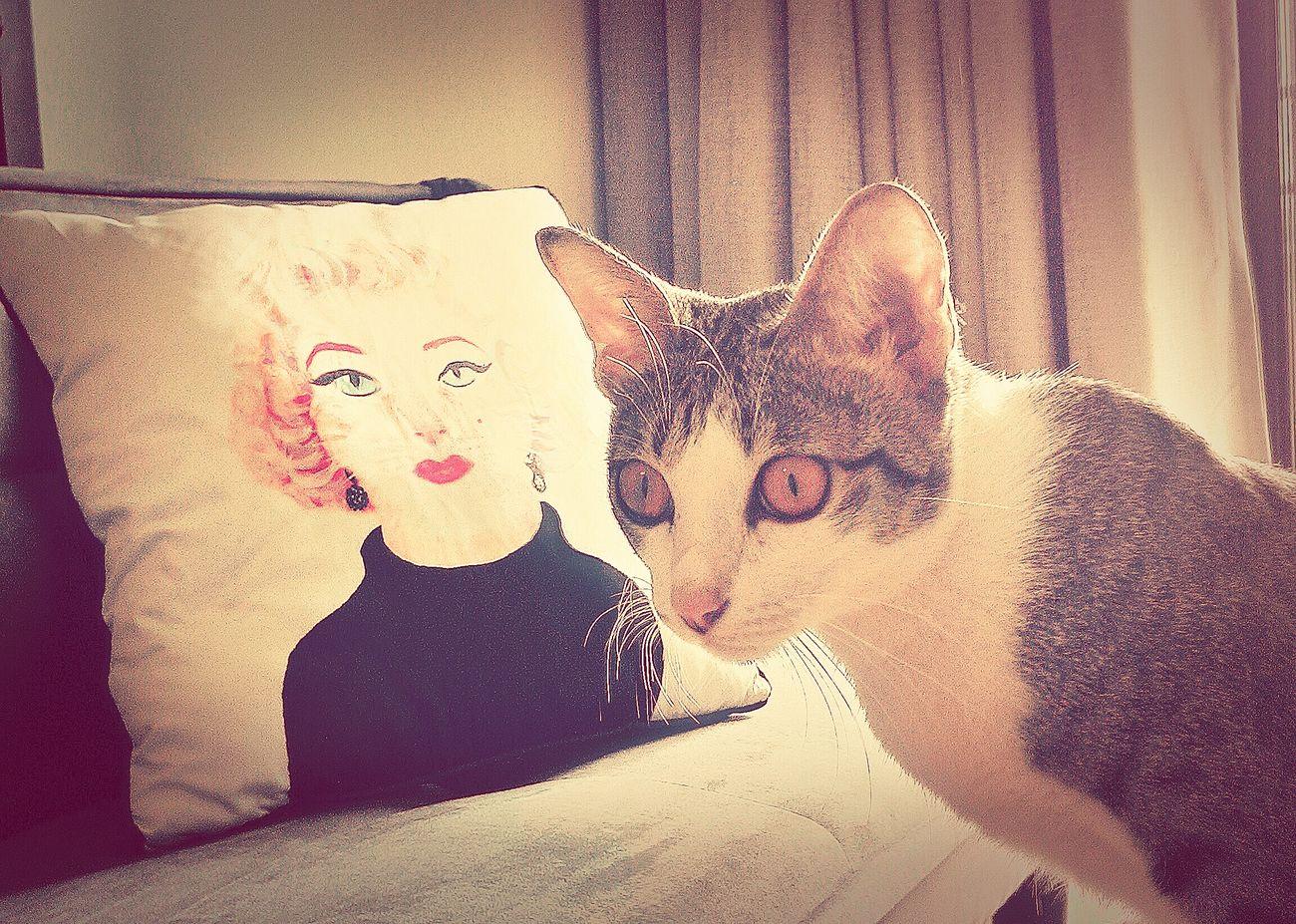 Cat Catsagram Cat Lovers