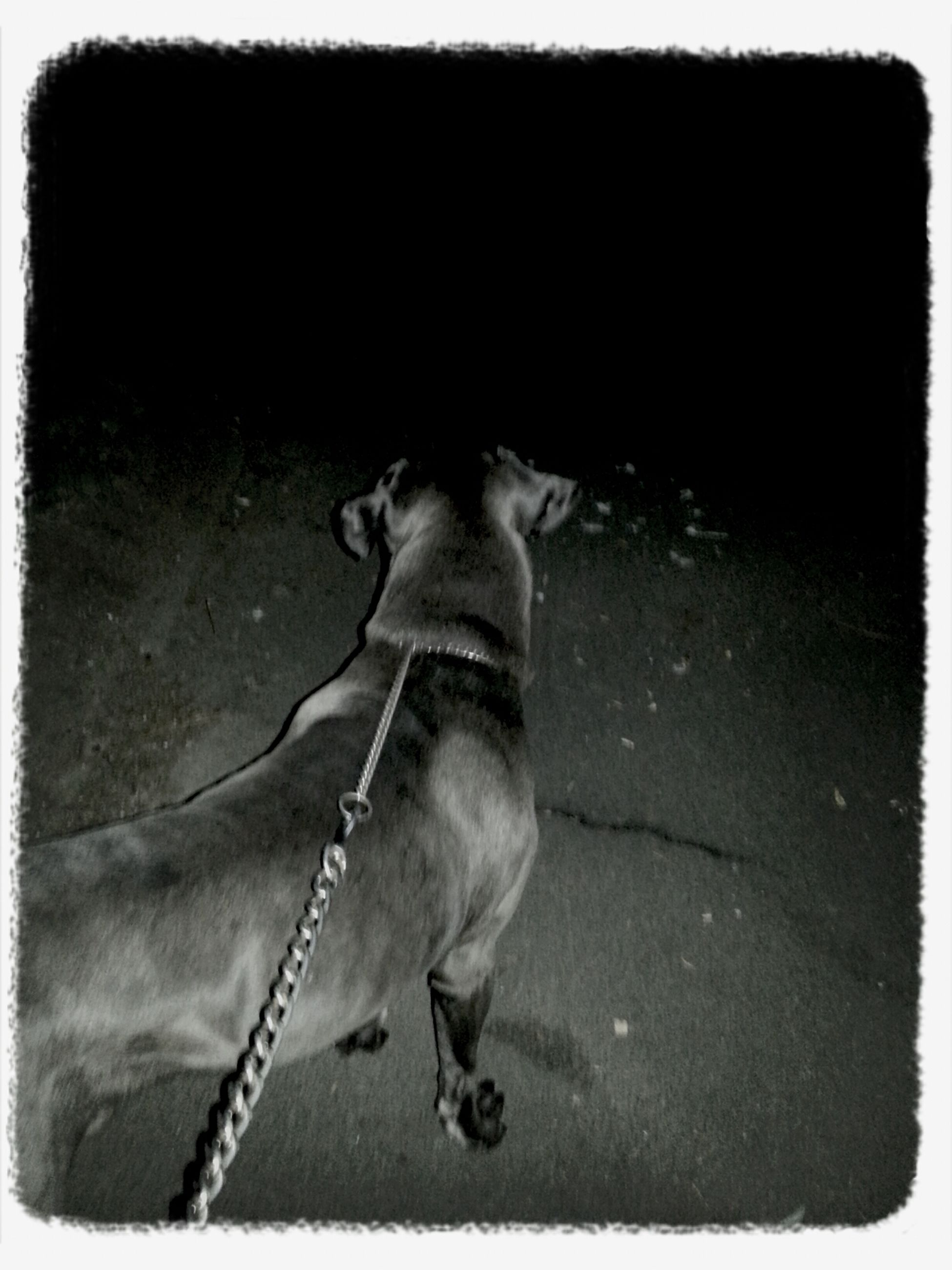 Excercising Nightphotography Dogoftheday Parklife takin rebs for a late night mooch :)