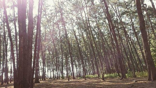 Into the wild!🌊 Anawangin Trailrunning