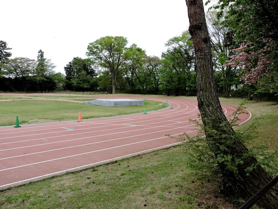 Empty Grass Green Color No People Outdoors Park - Man Made Space Running Track Spring Track And Field Tree
