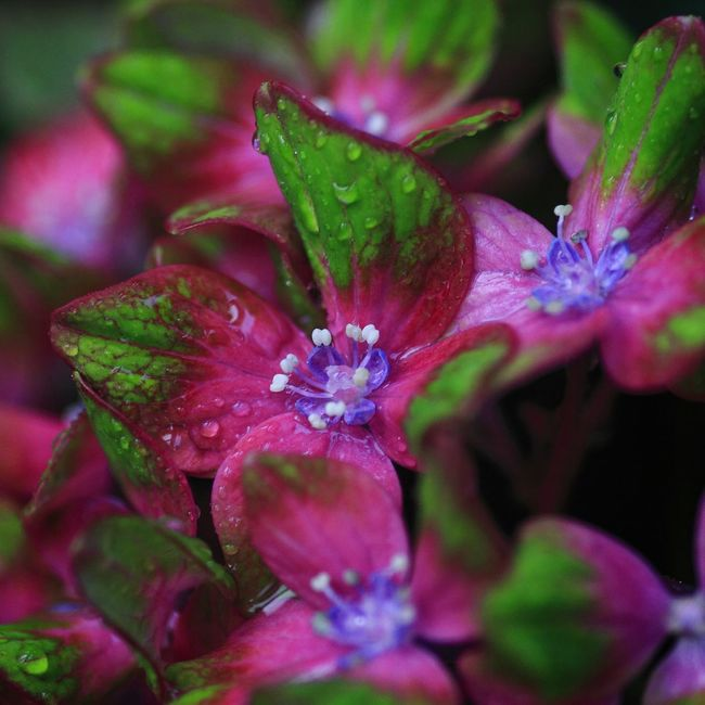 EyeEm Nature Lover We Are Photography, We Are EyeEm EyeEm Best Shots Eye4photography