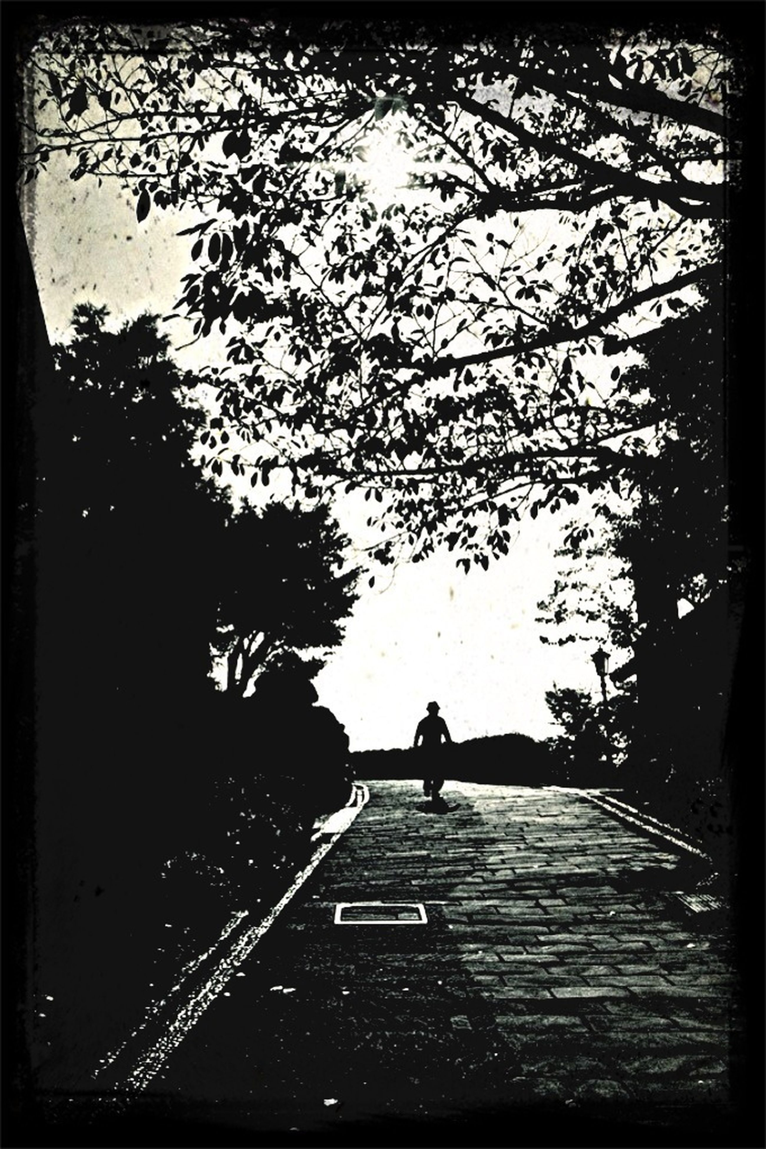 transfer print, silhouette, tree, transportation, auto post production filter, men, road, lifestyles, the way forward, walking, street, leisure activity, full length, unrecognizable person, clear sky, sky, mode of transport, land vehicle