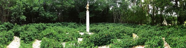 Simplicity. Leaves Bushes Formation Marble Garden Pillar Vizcaya Gardens Vizcaya Museum Vizcaya Florida Fine Art Photography Miami On The Way