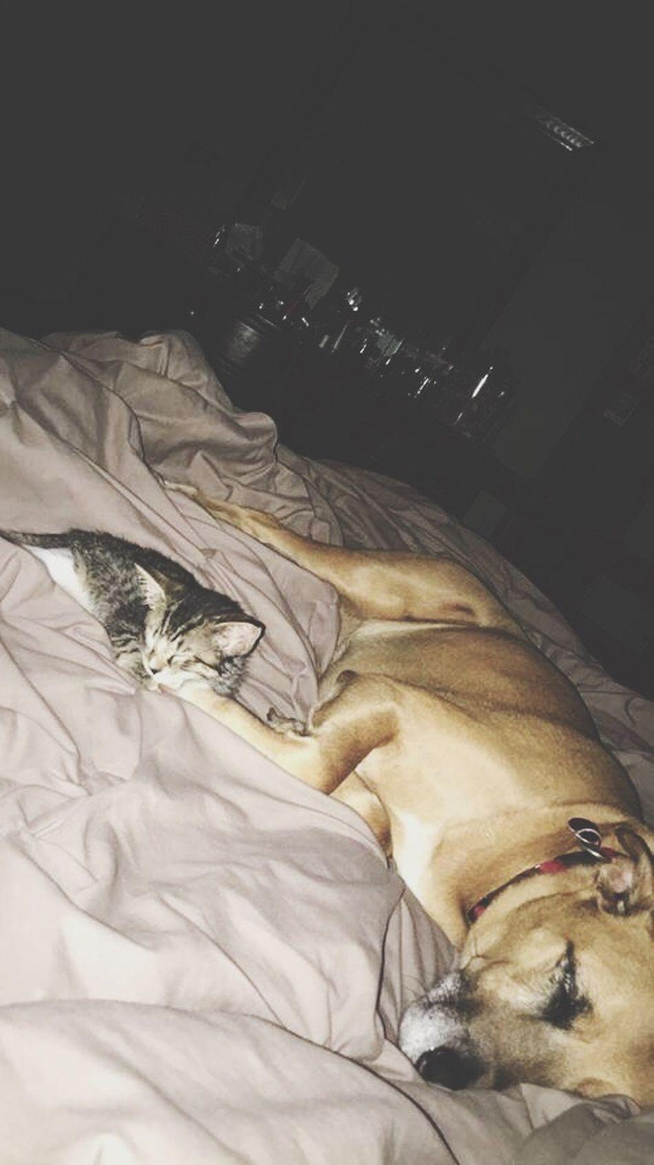 Adorable Dog Kitten Kitty TooCute Naptime Pets Rizzo Sadie Best Friends Cuddle MeltsMyHeart Makesmesmile Ilovethem EyeEmNewHere
