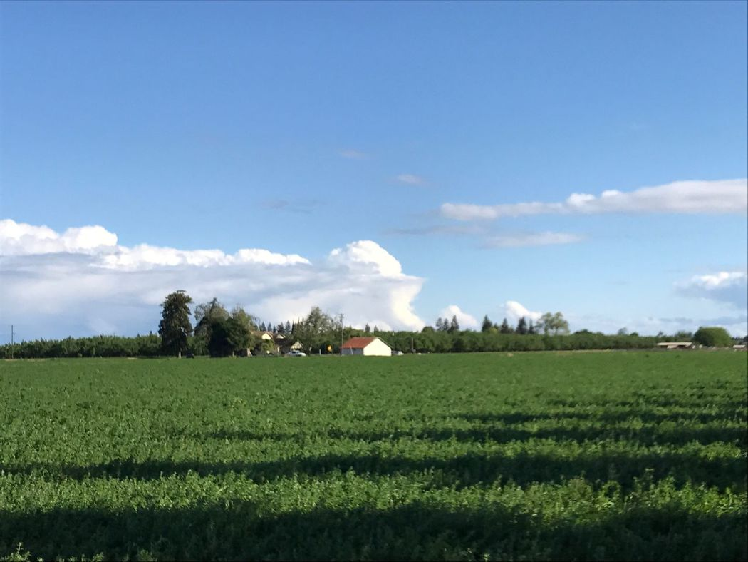 Rural Scene Sky Landscape Field Nature Agriculture Growth Scenics Tranquility Tranquil Scene Tree Beauty In Nature Outdoors Cloudscape No People Built Structure Green Color Grass Cloud - Sky Architecture California Agriculture Farm Life Copy Space Country Fields Green Live For The Story