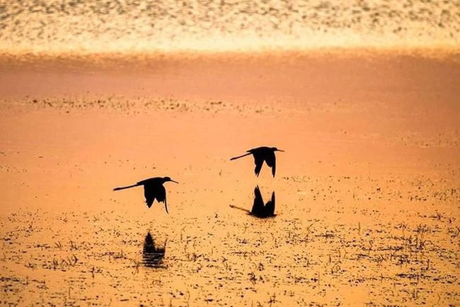 Akkuyruklu kız kuşu. Körfez Fener Gölünde popülasyon ile birlikte yeni tür sayısı da artıyor. Devam eden gözlemler sayesinde alanı Aquapark ve mesire alanı olmaktan kurtarıp kuş gözlem evi olmasını sağlamaya çalışıyorum. Bir gün bu doğal alanların değerini anlayacak insanoğlu. İsmail Balı © 2015. Ismailbalıphotography Moment O_an Sunset Lake Birds Back Home Ornito Ornitology Kus Bird Wild Wildlife Shadow Reflection Mirror Midnight Instalike Instagood Instadaily VSCO Vscocam Vscogood Vscolover @natgeoturkiye @natgeocreative @natgeoyourshot @natgeo @atlas_dergisi