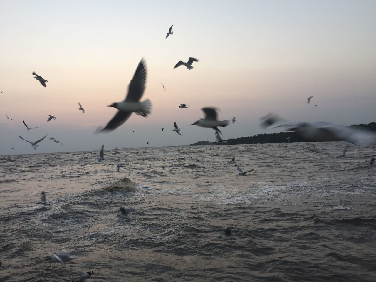 flying, animal themes, bird, animals in the wild, spread wings, animal wildlife, large group of animals, flock of birds, nature, mid-air, water, sea, migrating, motion, seagull, beauty in nature, no people, sunset, outdoors, togetherness, sky, day