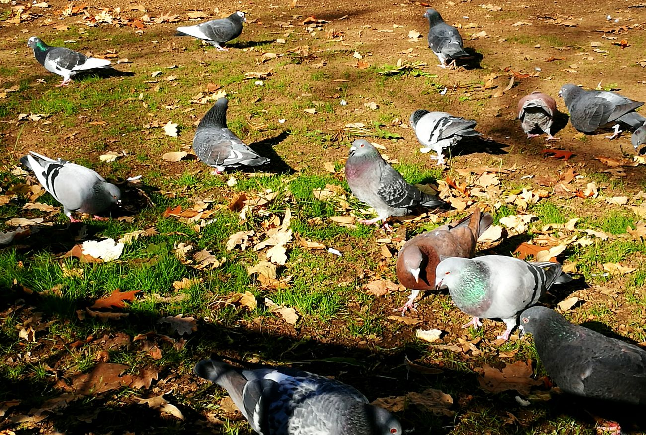 Nature Pigeon Pigeonslife High Angle View Outdoors Backgrounds Day Close-up No People Low Section