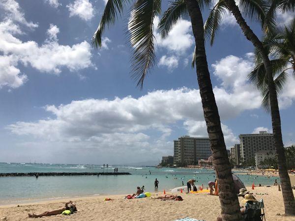 Waikiki Beach Palm Tree Beach Sea Sky Water Tree Nature Beauty In Nature Horizon Over Water Honolulu, Hawaii