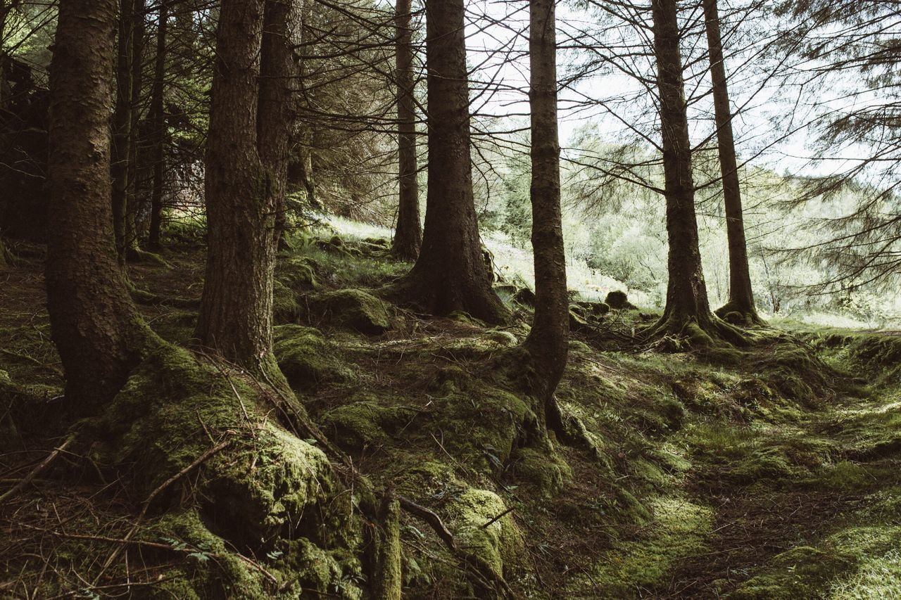 Forest Tree Nature Tree Trunk WoodLand Scenics Beauty In Nature Day Landscape No People Tranquility Outdoors Wilderness Area