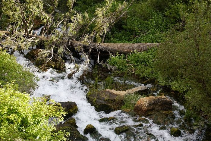 Nature Outdoors Beauty In Nature Water Forest