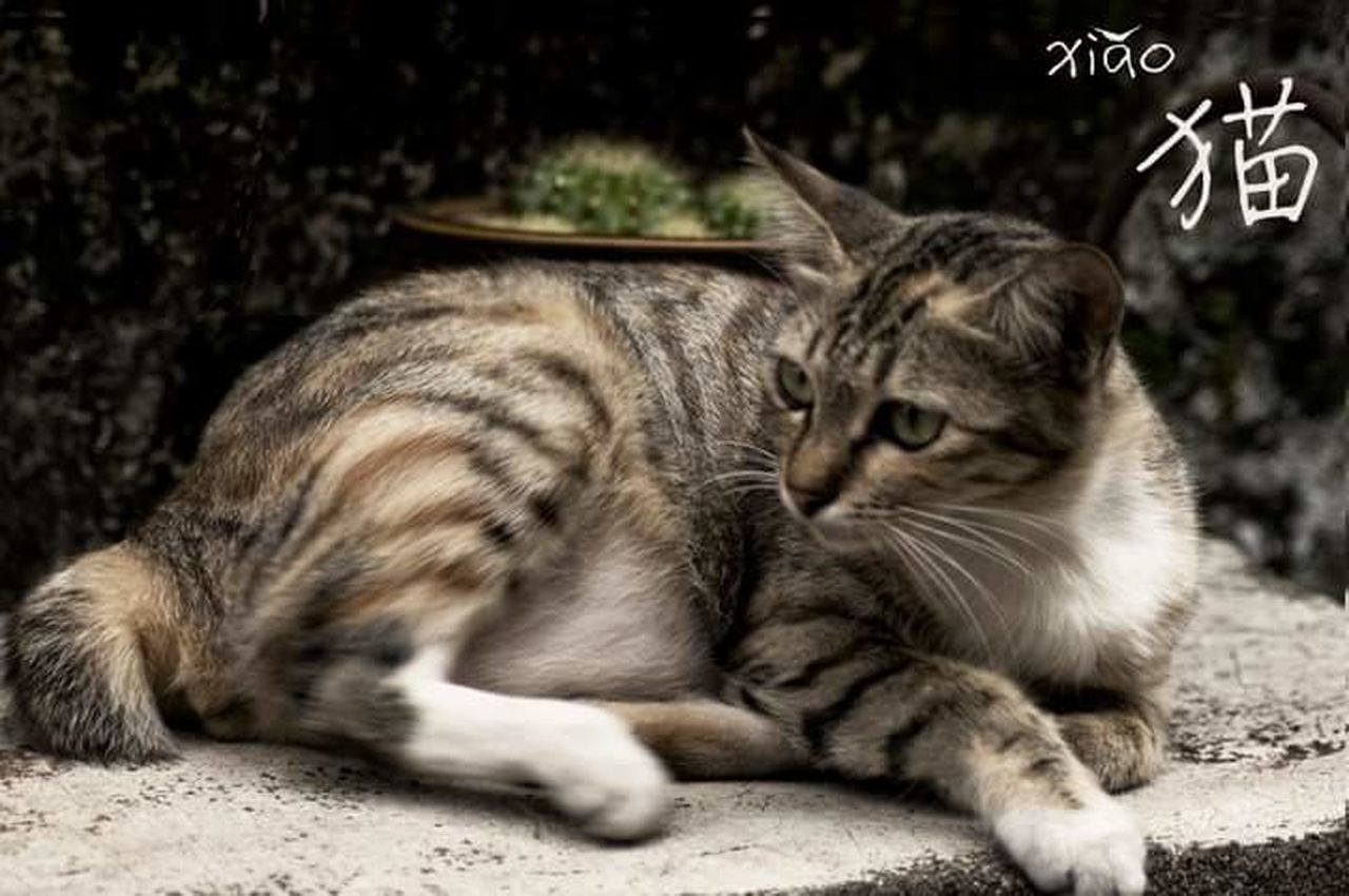 domestic cat, pets, domestic animals, animal themes, feline, one animal, cat, no people, whisker, sitting, mammal, close-up, outdoors, day
