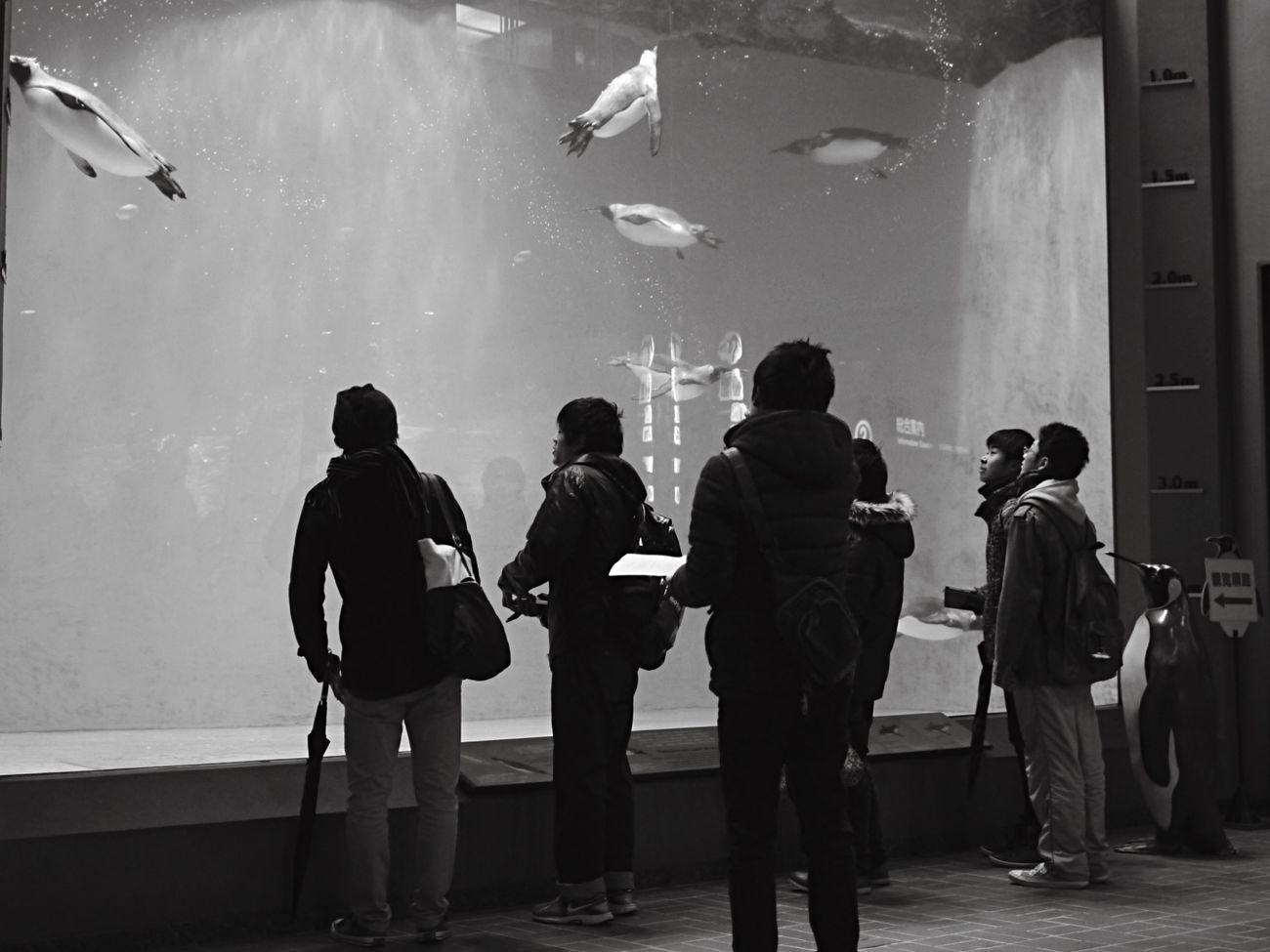 Penguin watching People Black And White BW2 filter(+3) Animal Inside Things Good morning EyeEm_crew