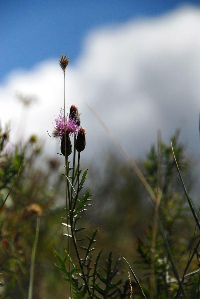 Nature Flower Flowers