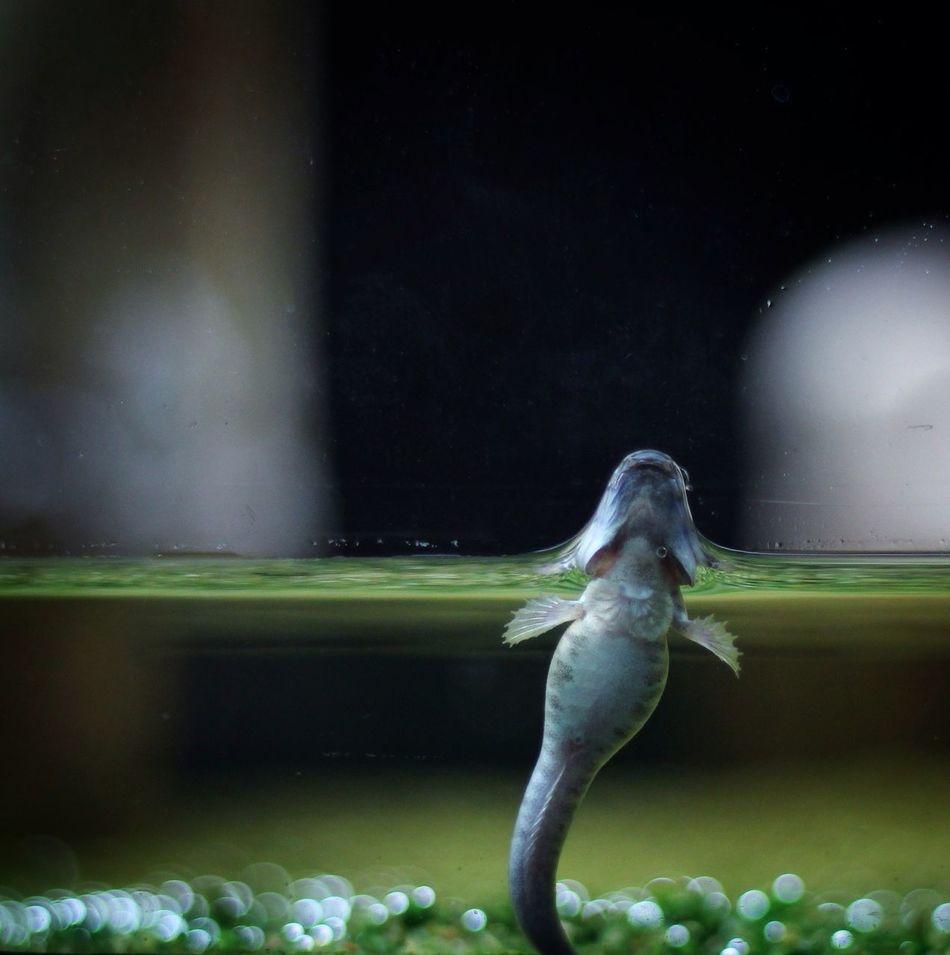 Shooting Fish In A Barrel Aquarium Fish Mudskipper