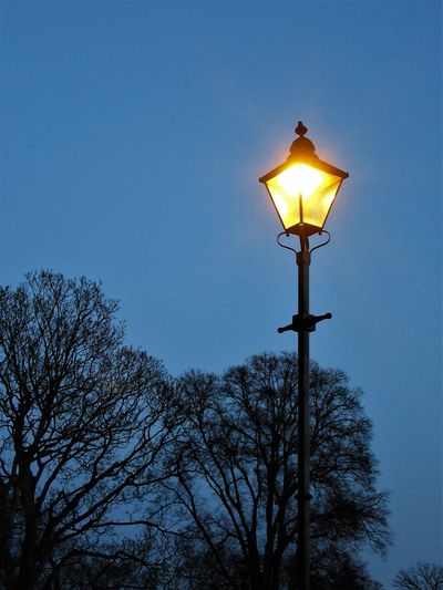 The lamp post Bare Tree Illuminated Lamp Lamp Post Lighting Equipment Low Angle View No People Outdoors Sky Street Street Light Tree