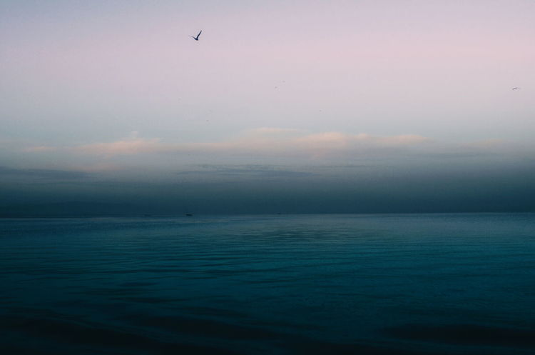 Smooth ride. Sea Scenics Water Tranquility Calm Flying Sea Water Scenics Tranquility Horizon Over Water Tranquil Scene Beauty In Nature Sunset Waterfront Dusk Seascape Nature Sky Bird Idyllic Calm Flying Non-urban Scene Majestic