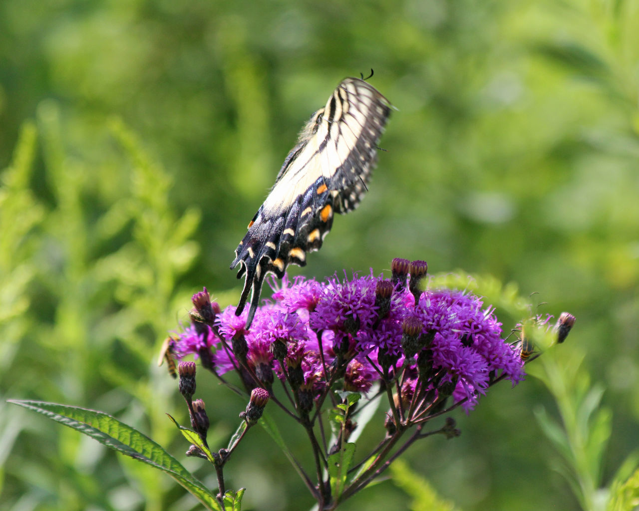 flower, one animal, animal themes, nature, animals in the wild, insect, purple, growth, plant, fragility, beauty in nature, freshness, focus on foreground, day, no people, animal wildlife, pollination, outdoors, close-up, butterfly - insect, thistle, flower head, perching