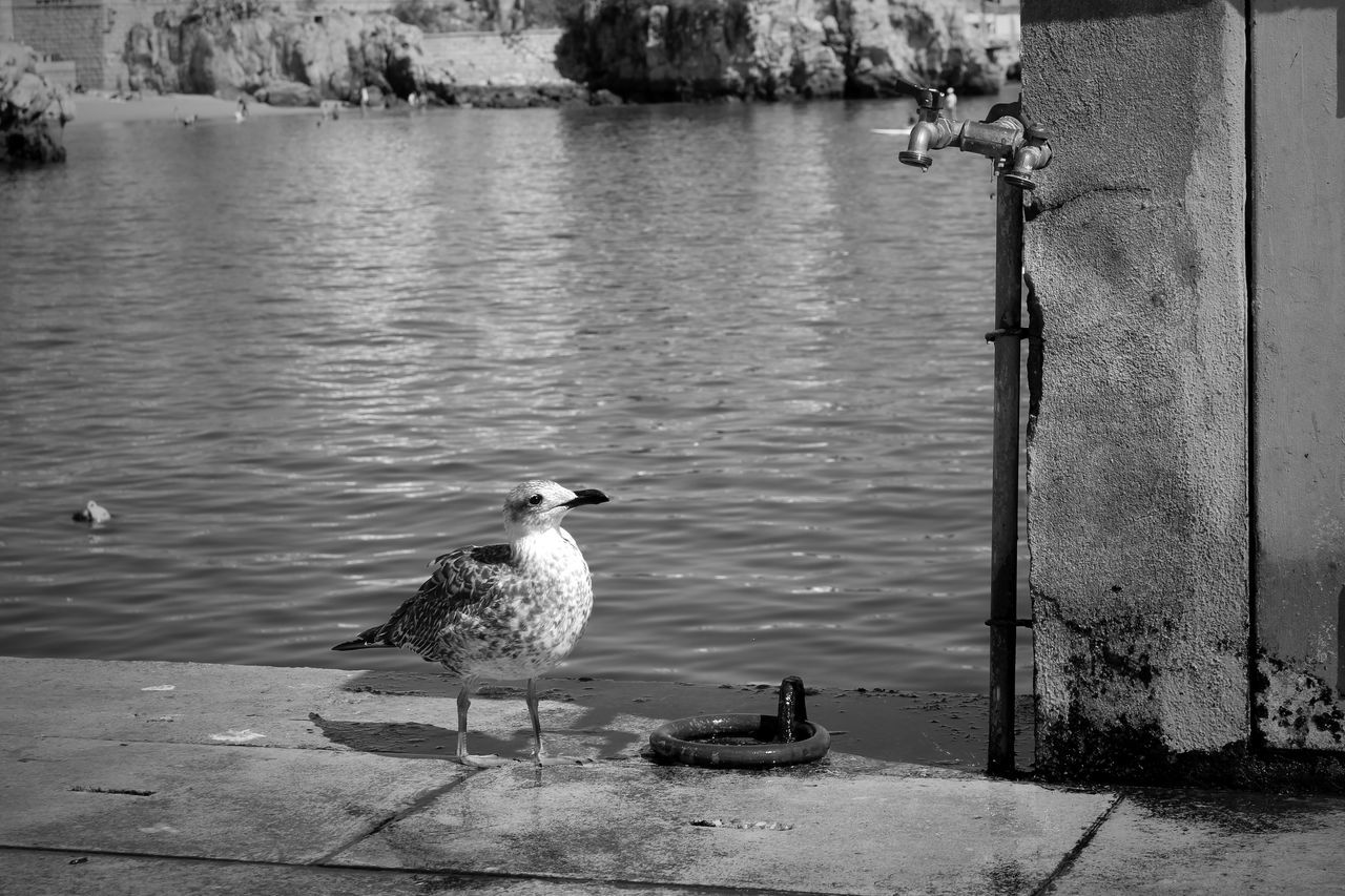 Seagull Water Tap Blackandwhite Calm Sea Dock Eye4photography  Eye4black&white  EyeEm Bird Photography Taking Photos Birds_collection EyeEm Best Shots EyeEm Nature Lover Black And White Black & White Water EyeEmBestPics Urban Landscape Eyeemphotography Seaside Minimalism Baia De Cascais Portugal