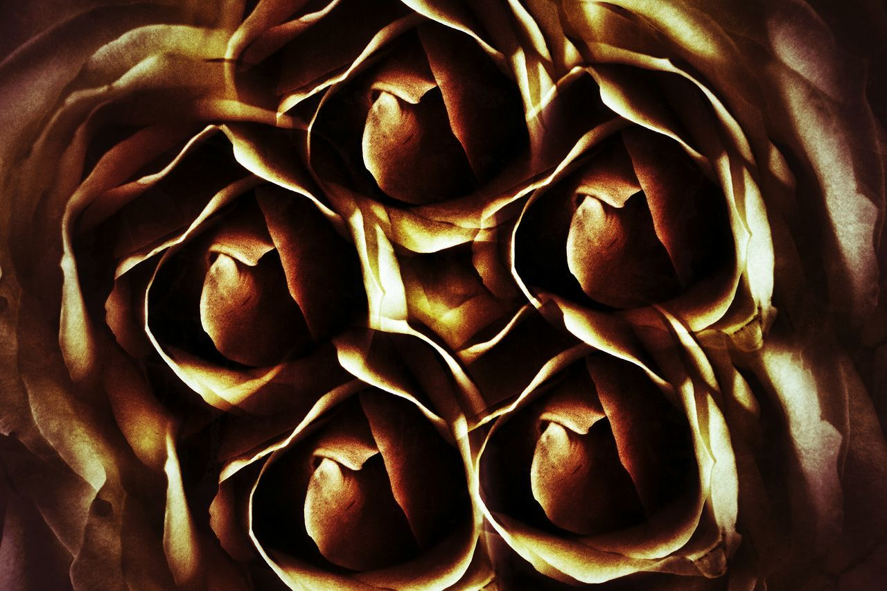 Na Cóïg Chridheach Rós Backgrounds Close-up No People The Impurist (no Edit, No Fun) Taking Photos Sony ILCA-68K Popular Photos My Unique Style My Art, My Soul... EyeEm Best Shots EyeEm Best Edits Extreme Edit Being Creative Snapseed Flower Head Flower EyeEm Nature Lover Roses