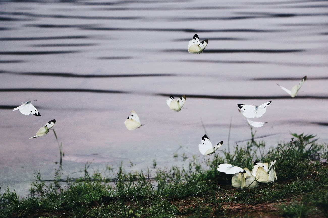 Animal Wildlife Animals In The Wild Flying Nature No People Outdoors Animal Themes Landscape Water Jinggangshan