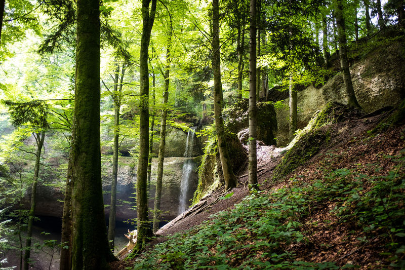 Beauty In Nature Day Forest Green Color Growth Landscape Nature No People Outdoors Scenics Tranquil Scene Tranquility Tree Tree Trunk Water Waterfall WoodLand