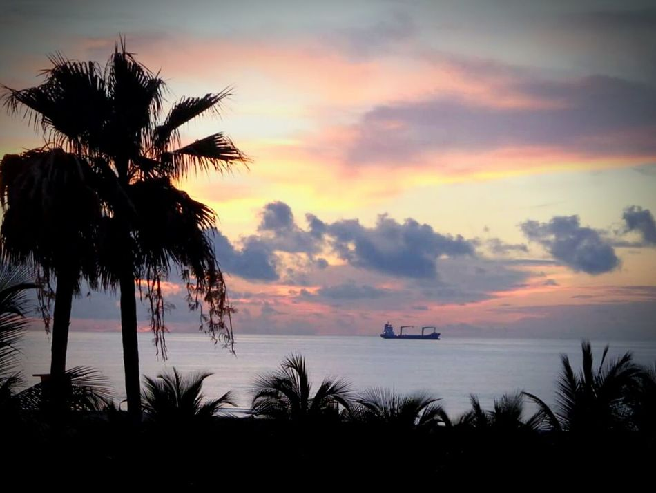 Work OneYearAgo Sunset Palm Tree