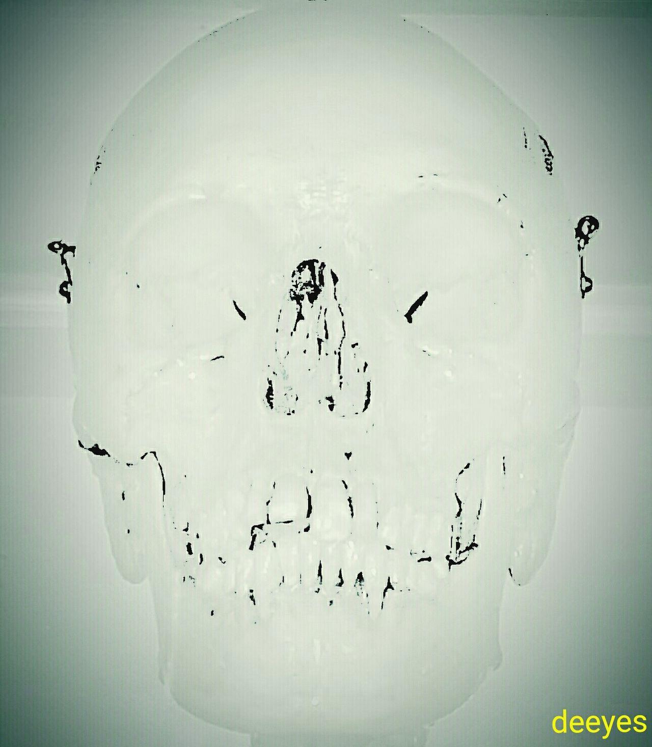 Eeyem Photography EyeEm Skull Eyeem Filter Vintage Anatomy Skull Skeleton Shot Bone Head Photo Editor