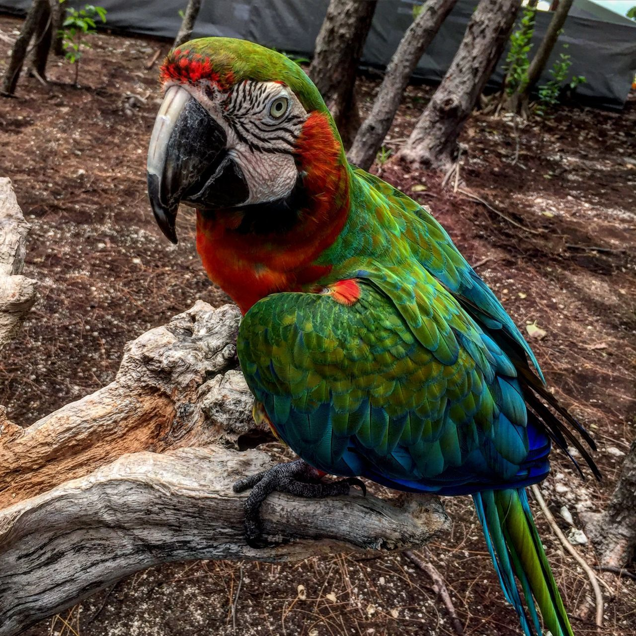 Beautiful stock photos of bahamas, Animal Themes, Animal Wildlife, Animals In The Wild, Beak