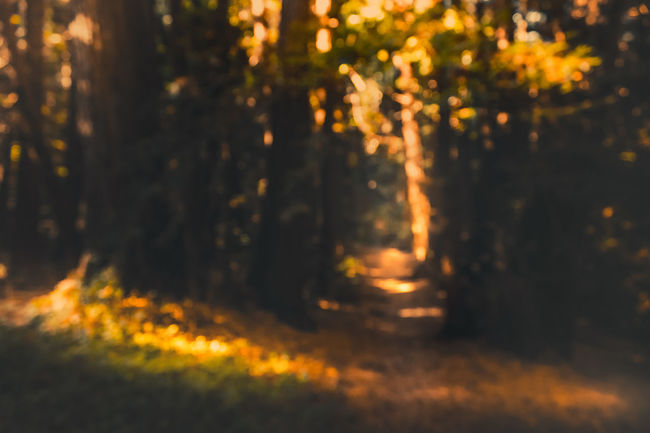Tree Forest Nature Defocused No People Illuminated Non-urban Scene Eye4photography  Bokeh Photography Outdoors Beauty In Nature Tranquility EyeEm Beautiful Tree Hiking