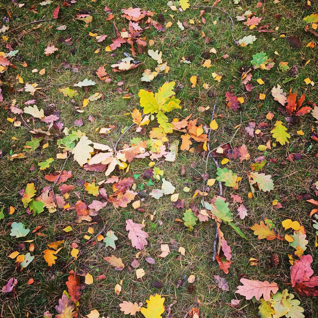 leaf, change, autumn, leaves, nature, fallen, maple, maple leaf, dry, abundance, beauty in nature, tranquility, outdoors, day, fragility, field, no people, scenics, close-up
